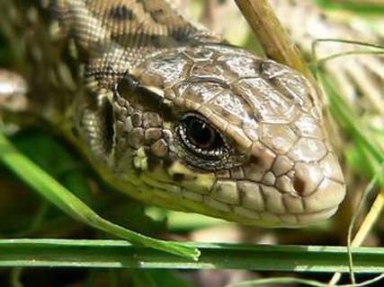 есть ли позвоночник у змее